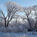 Frosty Trees by Bonfire Photography