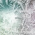 Frosty Windowpane by Amy Cicconi