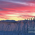 Frosty Winter Sunrise by Rick  Monyahan