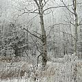 Frosty Wonderland by Katerina Naumenko