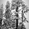 Frozen Beauty by Betty Depee