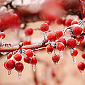 Frozen Berries by Frozen in Time Fine Art Photography