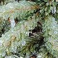 Frozen Boughs by Shana Rowe Jackson