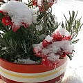 Frozen Christmas Flowers by Deborah A Andreas