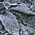 Frozen  by Douglas Barnard