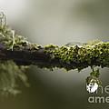 Frozen Droplet by Anne Gilbert