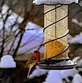 Frozen Feeder And Disappointment by Zafer Gurel