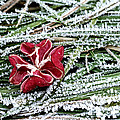 Frozen Flower by Mats Silvan