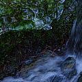 Frozen Garden Stream by Roxy Hurtubise