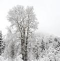 Frozen Giant by Dustin  LeFevre