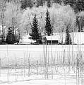 Frozen Lake by Christine Czernin-Morzin