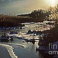 Frozen Marsh by Skip Willits