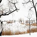 Frozen Marshland IIi by Regina Geoghan