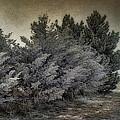 Frozen November Day by Ellen Heaverlo
