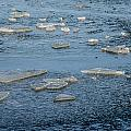 Frozen Ocean  by Roxy Hurtubise