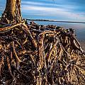 Frozen Roots by Jon Cody