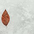Frozen Seasons by Karol Livote