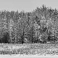 Frozen by Sebastian Musial