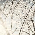 Frozen Tree Branches In Winter by Oleksiy Maksymenko