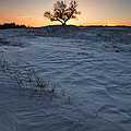 Frozen Tree Of Wisdom by Aaron J Groen