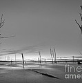 Frozen Trees Bw by Michael Ver Sprill