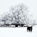 Frozen World by Mike  Dawson