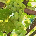 Fruit Of The Vine - Garden Art For The Kitchen by Brooks Garten Hauschild