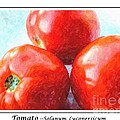 Fruit Of The Vine - Tomato - Vegetable by Barbara Griffin