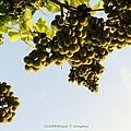 Fruits Of Nature by Sonali Gangane