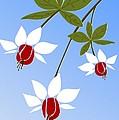 Fuchsia by Anastasiya Malakhova