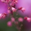 Fuchsia Explosion by Margie Hurwich