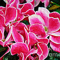 Fuchsia Flowers Painterly by Andee Design