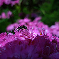Fuchsia Sweetness by Kasey Hynes