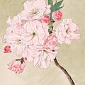 Fukurokuju - God Of Longevity - Vintage Watercolor by Just Eclectic