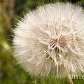 Full Bloom by Bob Phillips