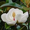 Full Bloom by Jean Goodwin Brooks