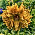 Full Bloom by Joe Geraci