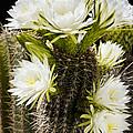Full Bloom by Kelley King