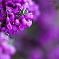 Full Bloom by Mark Alder