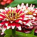 Full Bloom by Paul Johnson