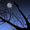 Full Moon And Black Winter Tree by Ben and Raisa Gertsberg