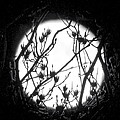 Full Moon And Poplar Branches by Jean Wright