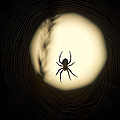 Full Moon And Spider by Tom Bushey
