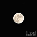 Full Moon by Bridgette Gomes