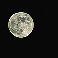 Full Moon by Debbie Portwood