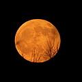 Full Moon Dec.10.2011 by Laura Yamada