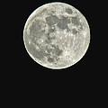 Full Moon II by Debbie Portwood