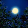 Full Moon by Klara Acel
