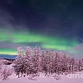 Full Moon Lights by Priska Wettstein