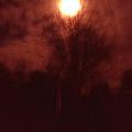 Full Moon Midnight In Garden Denmark by Colette V Hera  Guggenheim